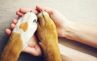 human hands and animal paws together - emotional intelligence and branding